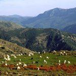 Itinerari di Gallura