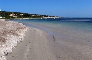 Spiaggia Tacca Rossa (Isola di San Pietro)
