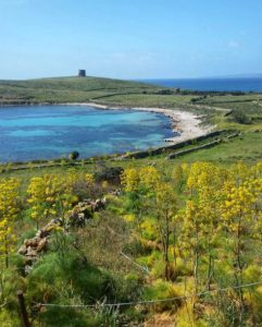 Spiaggia di Cala Barche Napoletane (Isola Asinara)