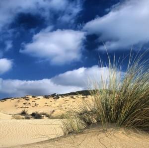 Dune Pistis (Arbus)
