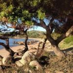 Spiaggia Porto Sole (Baia Sardinia)